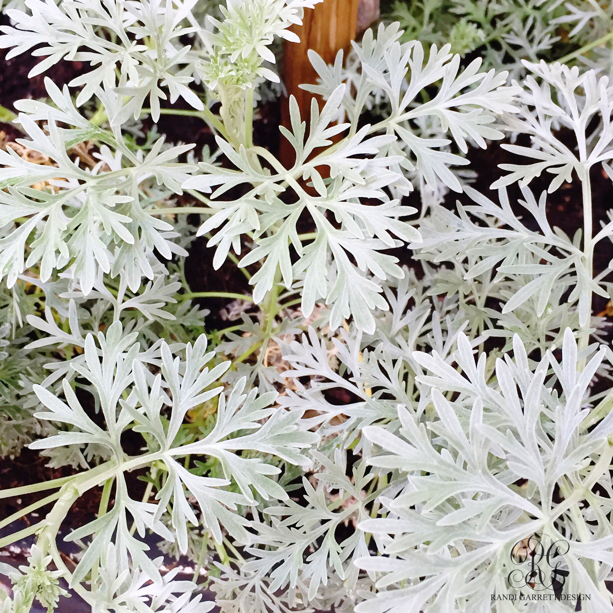 perennial plants for spring