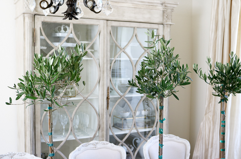 mini olive tree in dining room for summer