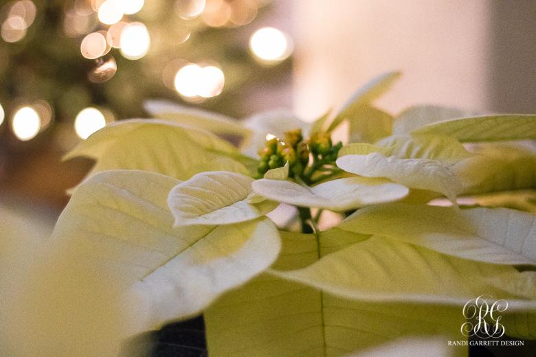 white-pointsettia-christmas-front-porch
